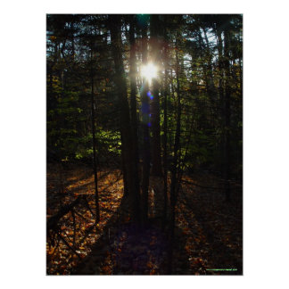 Forest Filter Poster