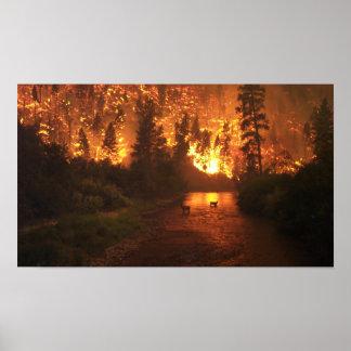 Forest Fire - Deer Poster