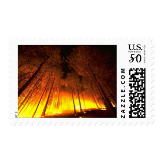 Forest Fire Postage