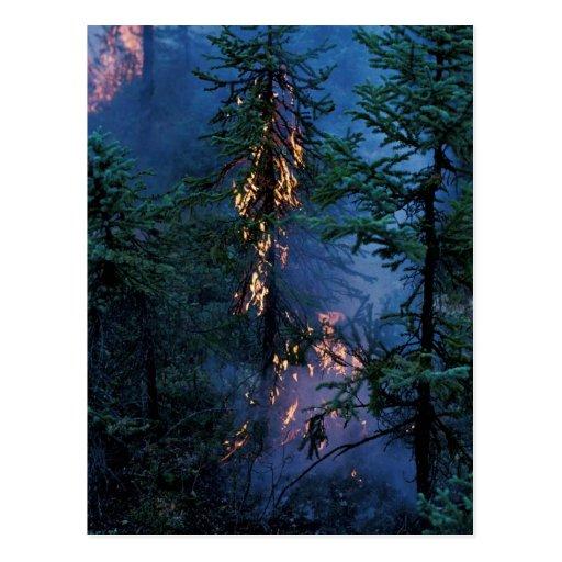 Forest Fire Postcard