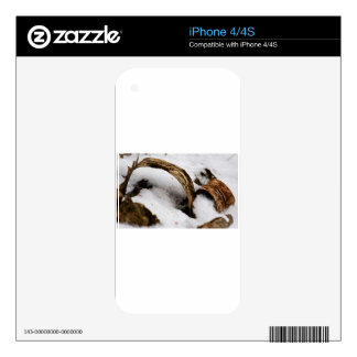 Forest Floor iPhone 4S Skin
