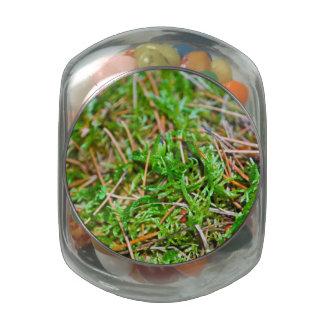 Forest Floor - Nehalem Bay State Park Glass Candy Jars