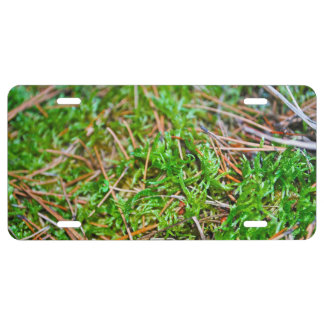 Forest Floor - Nehalem Bay State Park License Plate