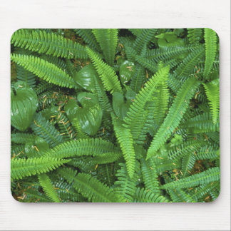 Forest Floor, Quinault Rain Forest, Olympic NP, Mouse Pad