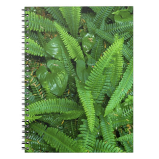 Forest Floor, Quinault Rain Forest, Olympic NP, Notebook