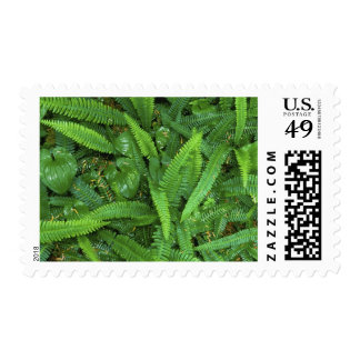 Forest Floor, Quinault Rain Forest, Olympic NP, Postage Stamps