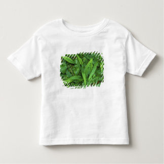 Forest Floor, Quinault Rain Forest, Olympic NP, Toddler T-shirt