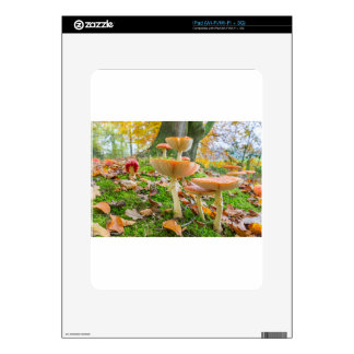 Forest floor with fly agarics and leaves in fall iPad decal