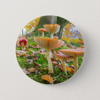 Forest floor with fly agarics and leaves in fall pinback button