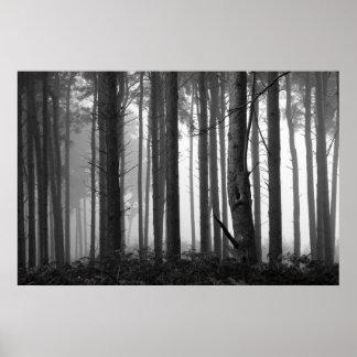 FOREST FOG 14 POSTER