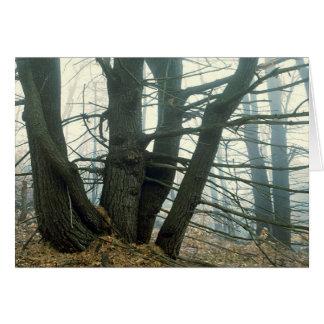 Forest Fog Card