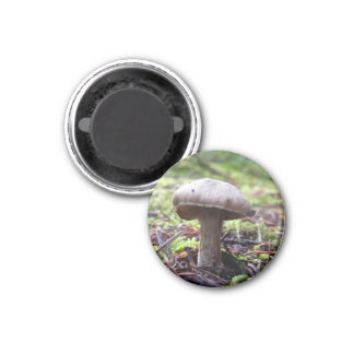 Forest Fungi 1 Inch Round Magnet