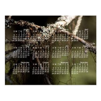 Forest Fuzz; 2013 Calendar Postcard