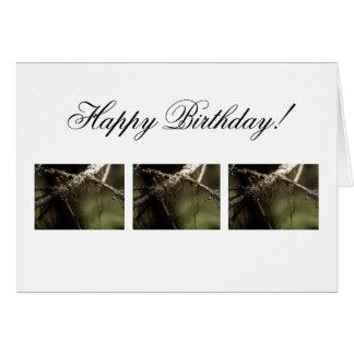 Forest Fuzz; Happy Birthday Card