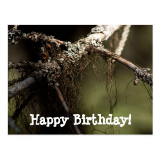 Forest Fuzz; Happy Birthday Postcard