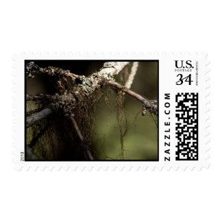 Forest Fuzz; No Text Stamp