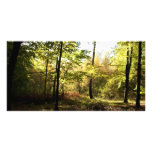 Forest glade photo card