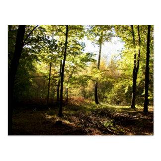 Forest glade postcard