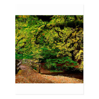 Forest Going Home Silver Falls Park Postcards