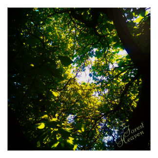 Forest Heaven catalpa tree ambiental Poster