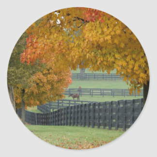 Forest Horsefarm Countryside Classic Round Sticker