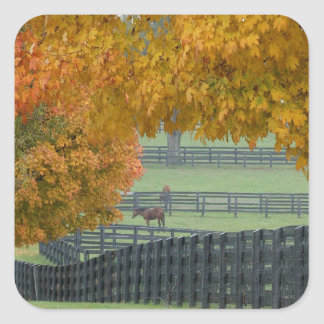 Forest Horsefarm Countryside Square Sticker