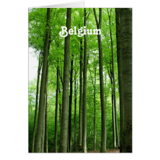 Forest in Belgium Stationery Note Card