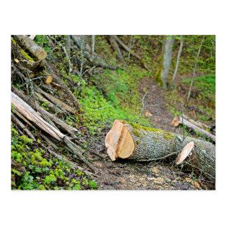 Forest In Darkness Postcard