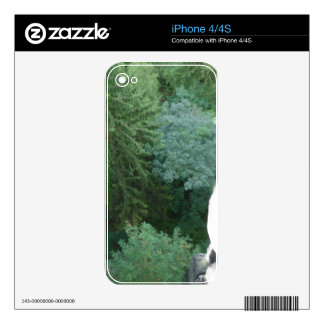 Forest in germany iPhone 4 skin