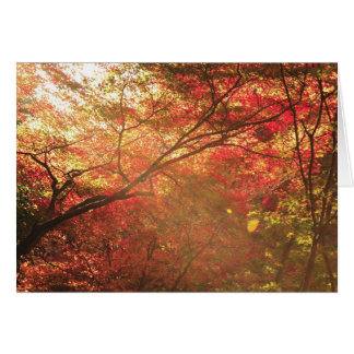 Forest in Kyoto Greeting Cards