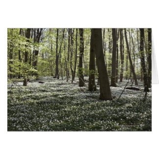 Forest in springtime 2 greeting card