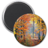 Forest in the Fall Magnet