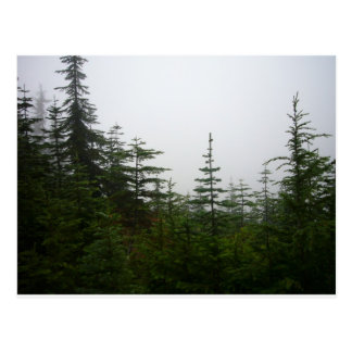 Forest in the Mist Postcard