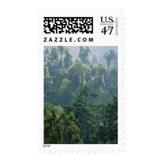 Forest in the mountain, Phobjikha Valley, Bhutan Postage