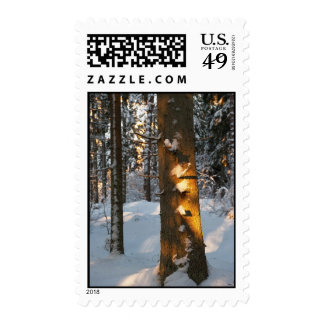 Forest in the winter postage stamps
