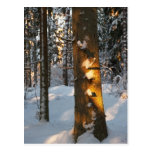 Forest in the winter postcard