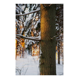 Forest in the winter print