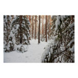 Forest in winter poster