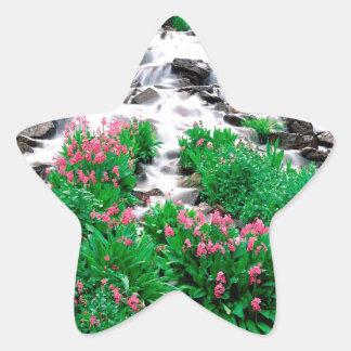Forest Indian Peaks Wilderness Roosevelt Star Sticker