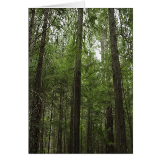 FOREST Inspirational Greeting Cards & Note Cards