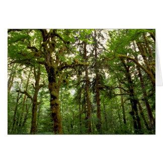 Forest interior, Washington Greeting Card