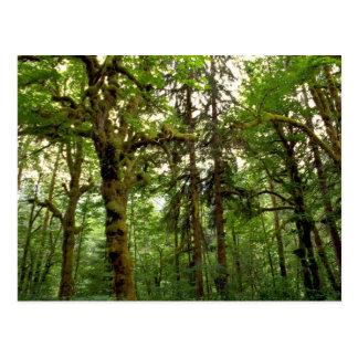 Forest interior, Washington Postcard