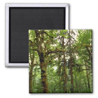 Forest interior, Washington Refrigerator Magnets