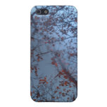 Forest iPhone Case iPhone 5 Cover