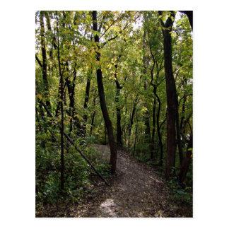 Forest Landscape Postcard