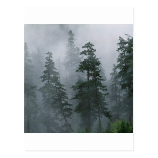 Forest Mist Clearing Storm Mount Hood Post Cards