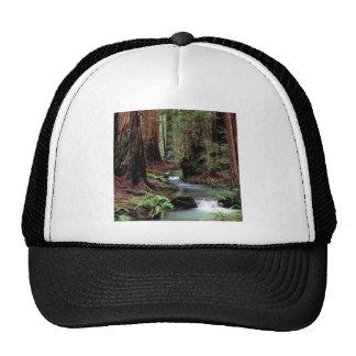 Forest Montgomery Woods Reserve Trucker Hat
