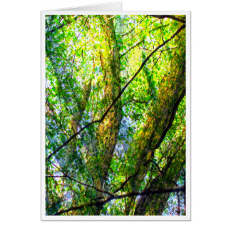 forest morning card