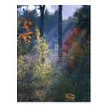 Forest Morning Vermont Fall Postcard