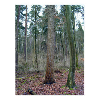 Forest mossy ground and tree trunks postcard